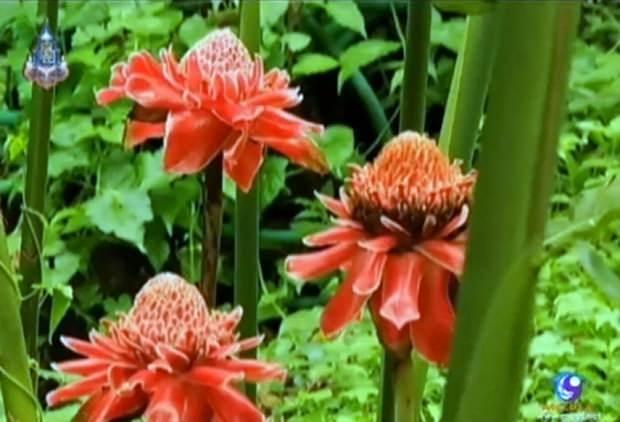 Wunderbare Blüten erfreuen die Besucher.