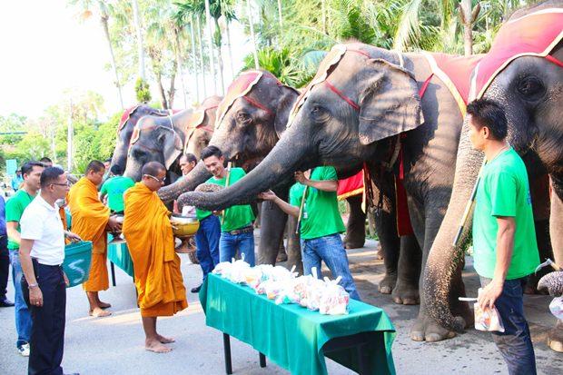 Der nationale Elefantentag beginnt mit Almosen an die Mönche.