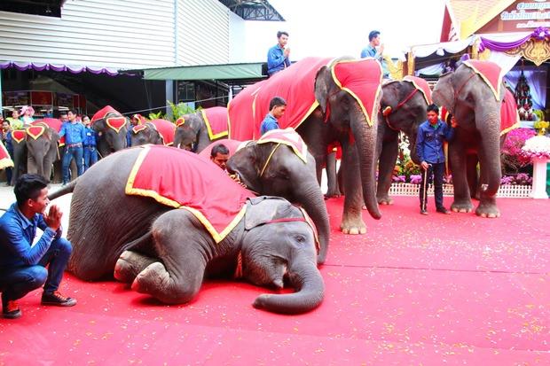 Der kleine Elefant zeigt großen Respekt für den Buddhismus.