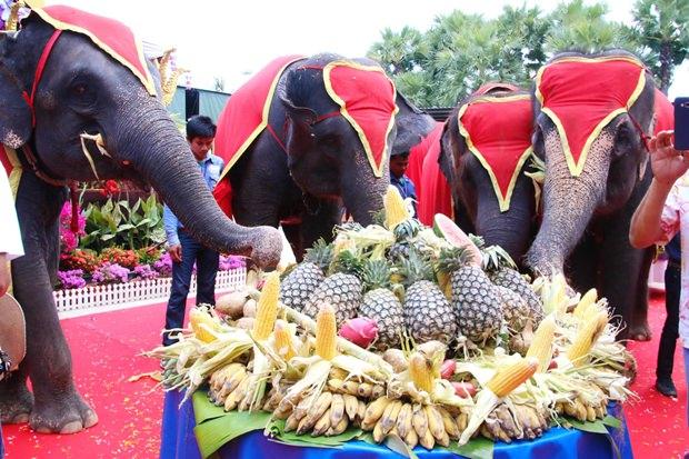 Die hart arbeitenden Elefanten an ihrem freien Tag.