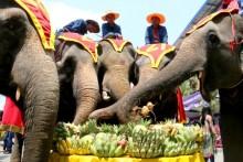 Die Elefanten fressen nach Herzenslust Köstlichkeiten.