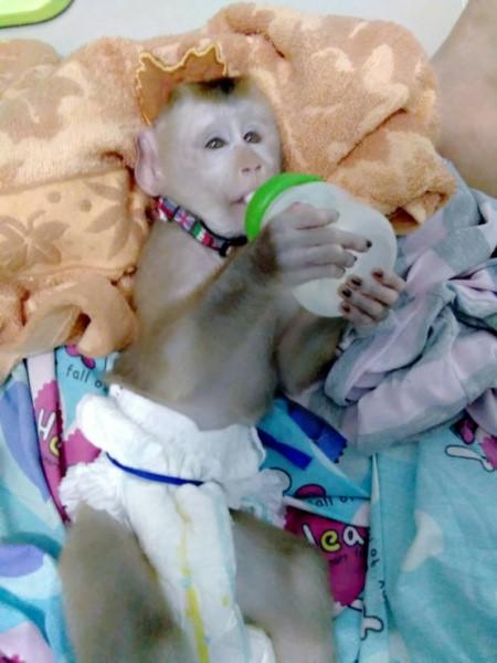 Die Affenbabys werden nun darauf vorbereitet wieder in der freien Natur zu leben.