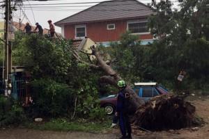 Ein umfallender Baum beschädigt Häuser und Fahrzeuge in der Soi Boonsampan.