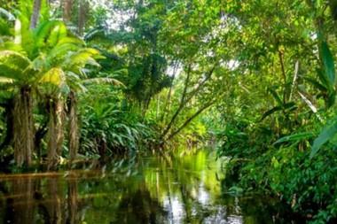 Das Amazonas Gebiet, die –noch – intakte Lunge der Welt. Michel Temer – ein schönes Leben auf Kosten des Amazonas und der ganzen Welt? Das Amazonas Gebiet – die –noch – intakte Lunge der Welt.