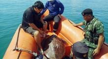 Beamte retten die Riesenschildkröte, die durch ihr GEwicht und dem seichten Wasser nicht mehr ins Meer zurück konnte.