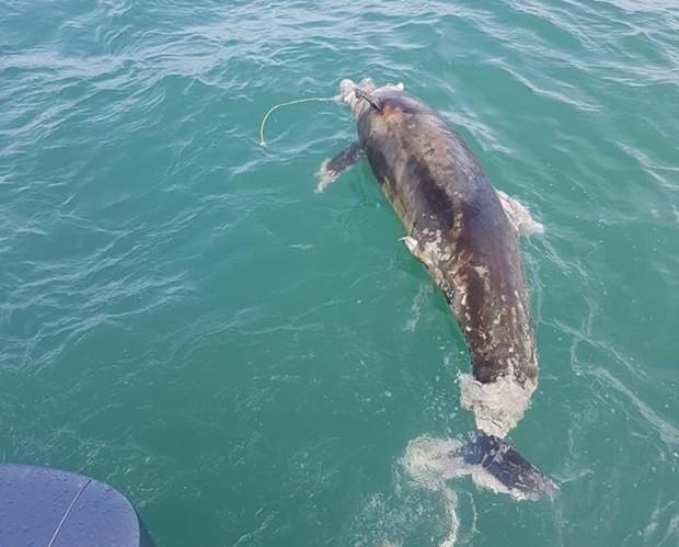 Der Video-Clip von dem toten Delfin ging über Sozailnetz über die ganze Welt.