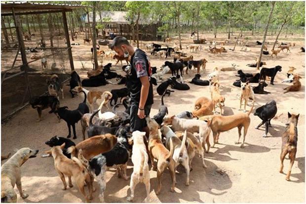 Nachbarn beschwerten sich darüber, dass die Hunde miteinander kämpfen und viele von ihnen sterben würden.
