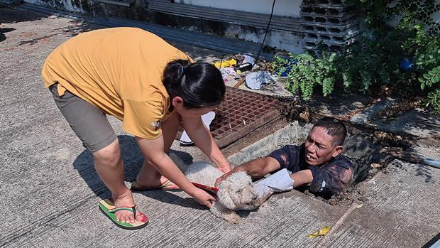 Der Pudel San, 14, konnte von seinem Besitzer noch rechtzeitig gerettet warden.