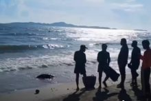 Eine tote Karettschildkröte wird am Strand gefunden.