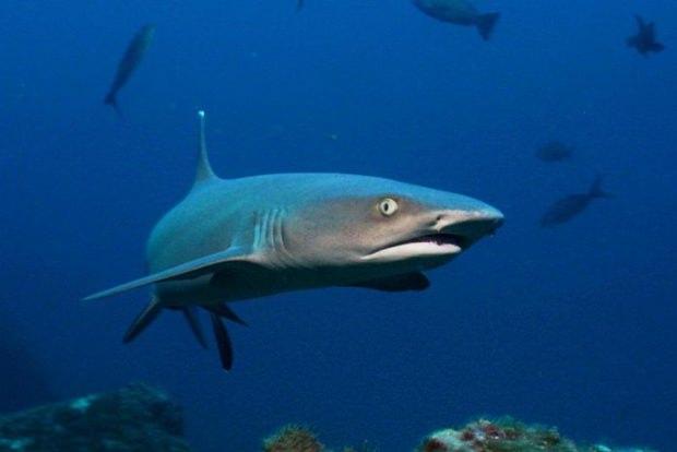 Langsam verbluten die Haie durch brutale Fischer.